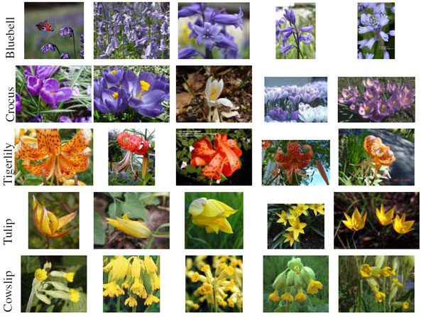 Figure 1 - Sample of the Flowers 17 Dataset. As we can see, some flowers might be indistinguishable using color or shape alone. Better results can be obtained by extracting both color and shape features.