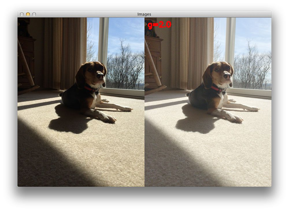 Figure 4: Now at gamma=2.0, we can fully see the details on the dogs face.