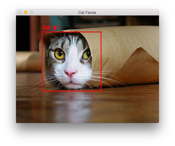 Figure 1: Detecting a cat face in an image, even with parts of the cat occluded.