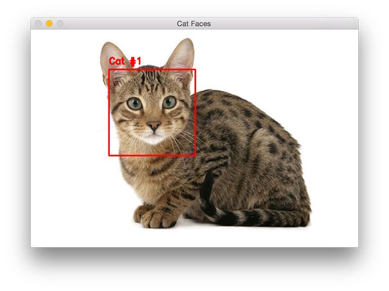Figure 3: Cat detection with OpenCV and Python (source)