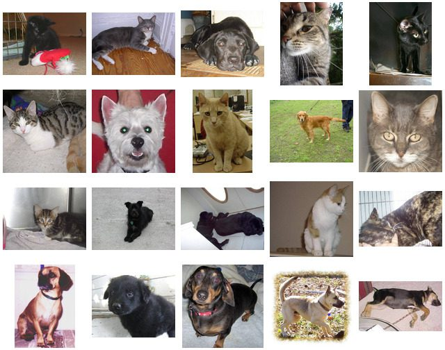 Figure 4: Examples from the Kaggle Dogs vs. Cats dataset.
